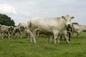 Kijken met Kim: Bijzondere buffelyoghurt